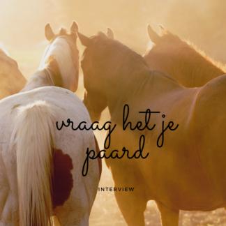 vraag het je paard